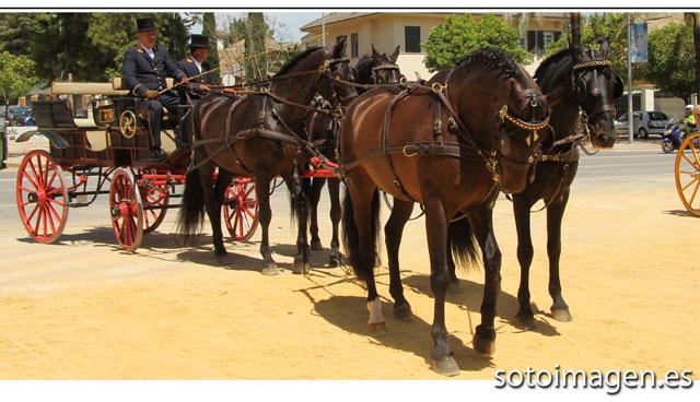 caballo-05