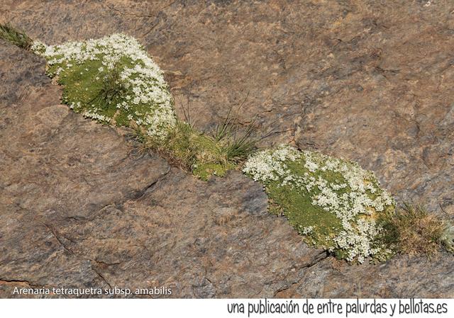 0-nevadensis-botanica-03
